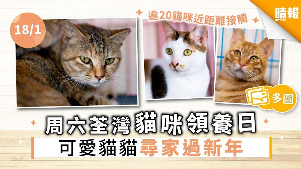 【周六好去處】周六荃灣貓咪領養日 逾20可愛貓貓尋家過新年