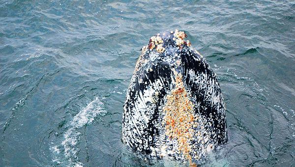 南極#觀鯨#擦身而過
