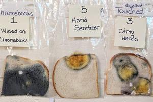 【武漢肺炎】沒有洗手觸摸麵包細菌驚人!美國老師發霉麵包實驗教小學生勤洗手