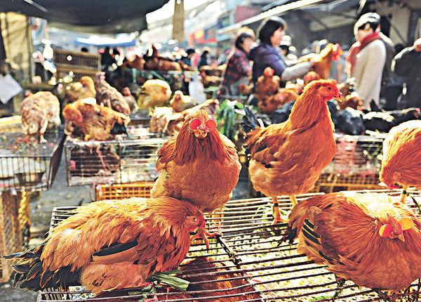 湖南雙清區爆禽流感 港停進口當地家禽