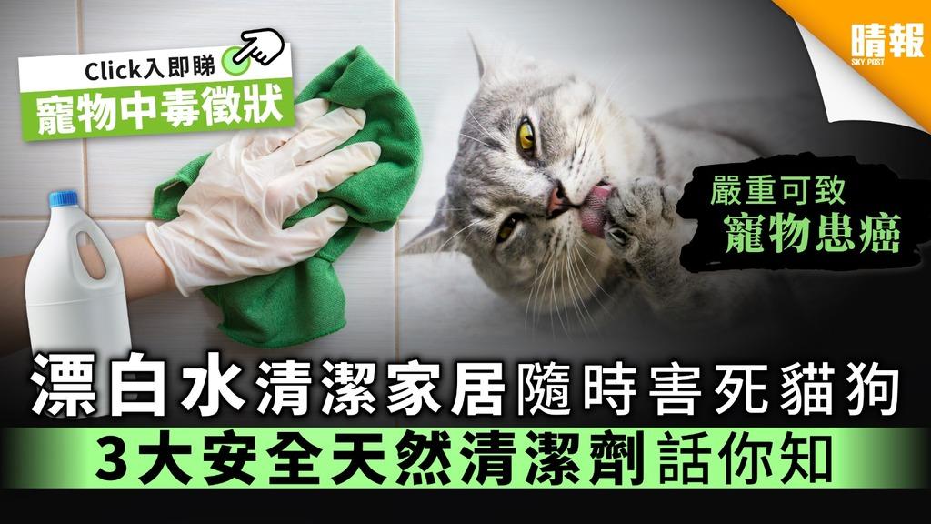 【全城抗疫】漂白水清潔家居隨時害死貓狗 3大安全天然清潔劑話你知