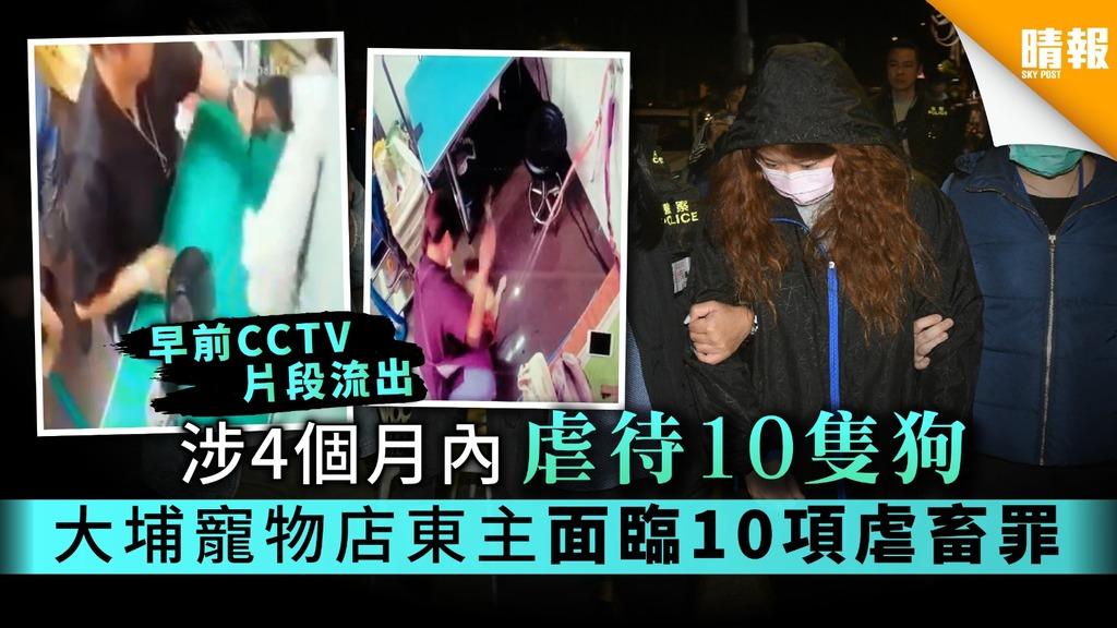 涉4個月內虐待10隻狗 大埔寵物店東主面臨10項虐畜罪