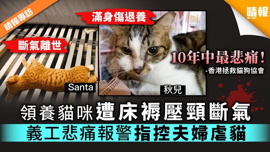【虐貓疑雲】領養貓咪遭床褥壓頸斷氣 義工悲痛報警指控夫婦虐貓
