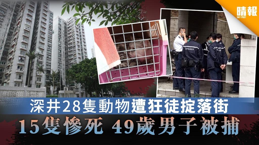 【豪景花園】深井28隻動物遭狂徒掟落街 15隻動物慘死 49歲男子被捕