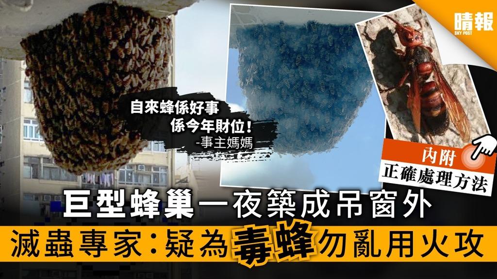【毒蜂入侵】巨型蜂巢一夜築成吊窗外 滅蟲專家:疑為毒蜂勿亂用火攻