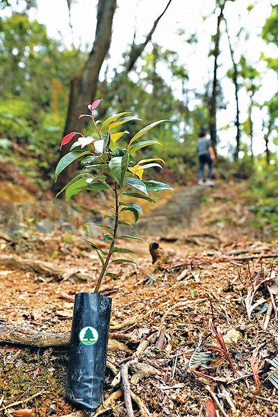 郊野公園遠足植樹日2020
