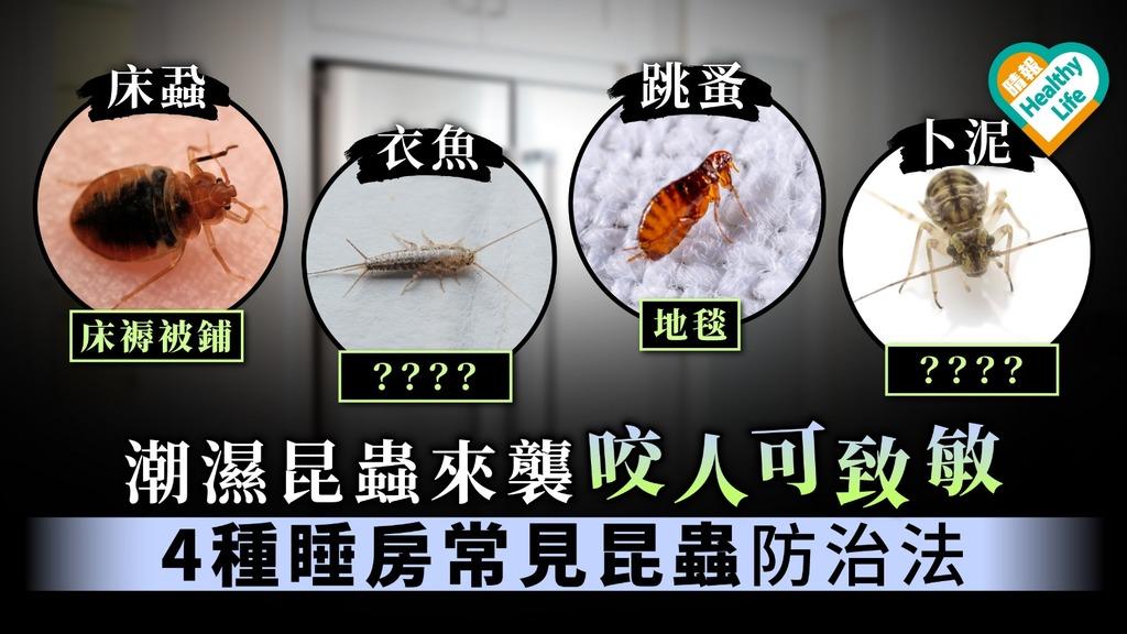 【除蟲】潮濕天氣昆蟲出沒咬人可過敏 4種睡房常見昆蟲防治法【床蝨、跳蚤、卜泥、衣魚】