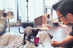 霆鋒北京家居隔離玩貓為樂