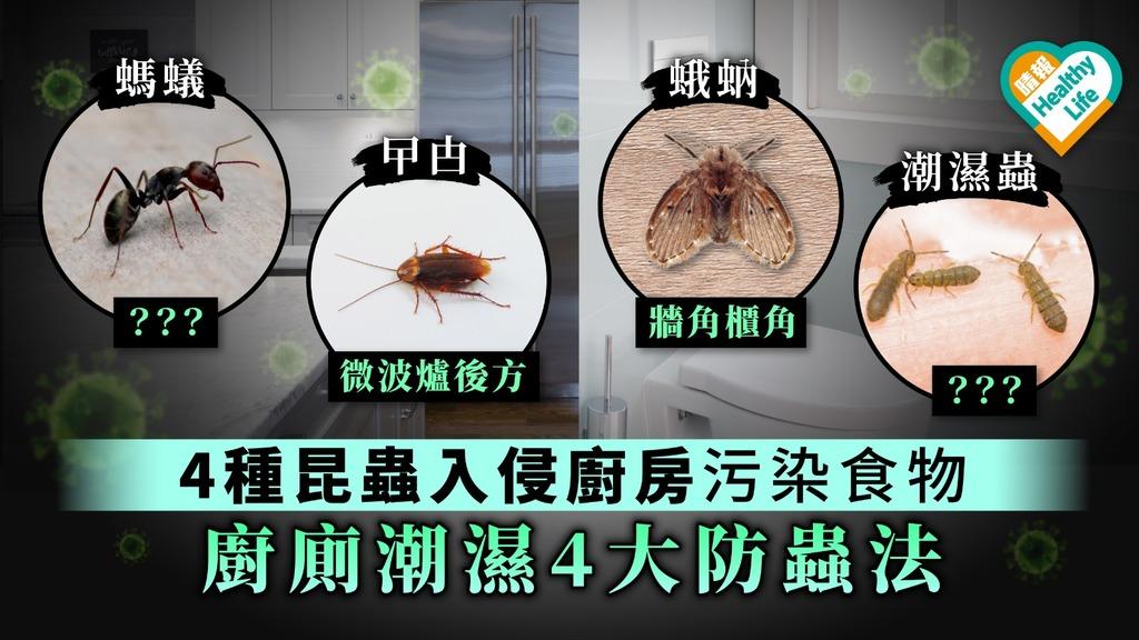 【除蟲】天氣潮濕昆蟲入侵廚房廁所兼播菌 4種常見昆蟲防治法【蛾蚋、潮濕蟲、螞蟻、曱甴】