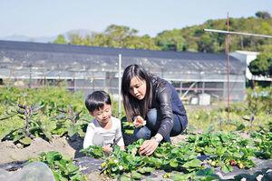 春回大地 游走綠色農莊