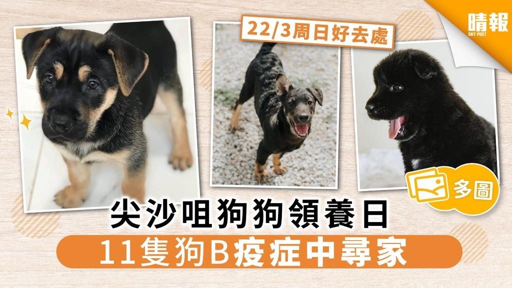 【周日好去處】尖沙咀狗狗領養日 11隻狗B疫症下尋家