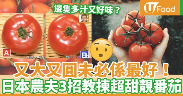 【番茄食譜】番茄又圓又光滑仍未夠!日本農夫教你3招挑選香甜番茄方法