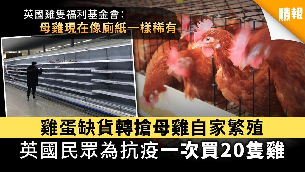 【養雞抗疫】雞蛋缺貨轉搶母雞自家繁殖 英國民眾為抗疫一次買20隻雞