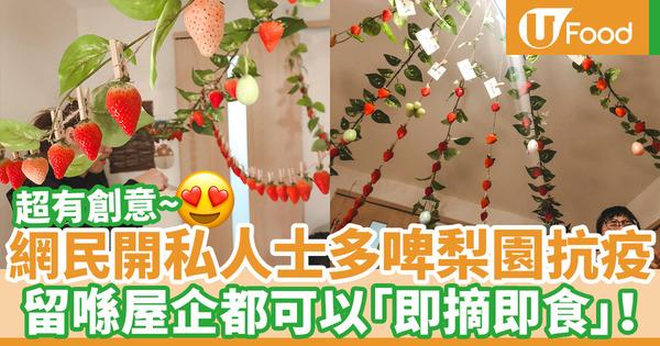【新冠肺炎】日本網民屋企開士多啤梨園抗疫!「即摘即食」創意爆燈
