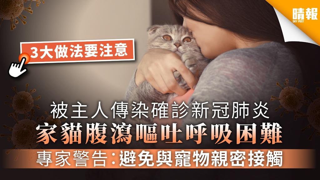 【寵物染疫】被主人傳染確診新冠肺炎 家貓腹瀉嘔吐呼吸困難 專家警告:避免與寵物親密接觸