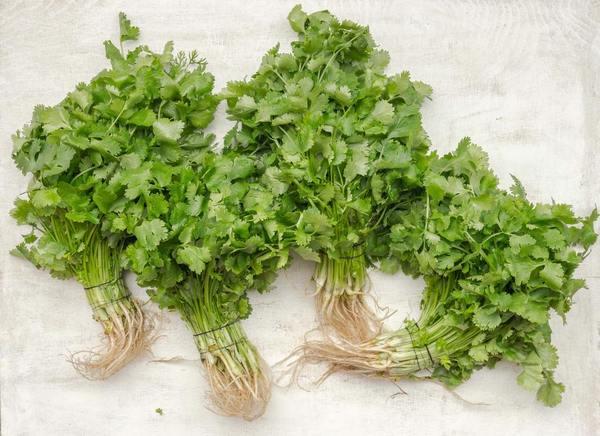 而台灣則稱為香菜,英文則是coriander或Chinese parsley,也稱為cilantro。