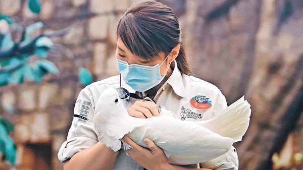 海洋公園發放動物大使短片 齊心抗疫