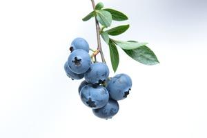 【藍莓冷知識】藍莓表面白霜代表發霉? 原來與新鮮度有關!(附揀藍莓貼士)