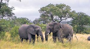 非洲草原直播 每日兩場Safari觀野生動物