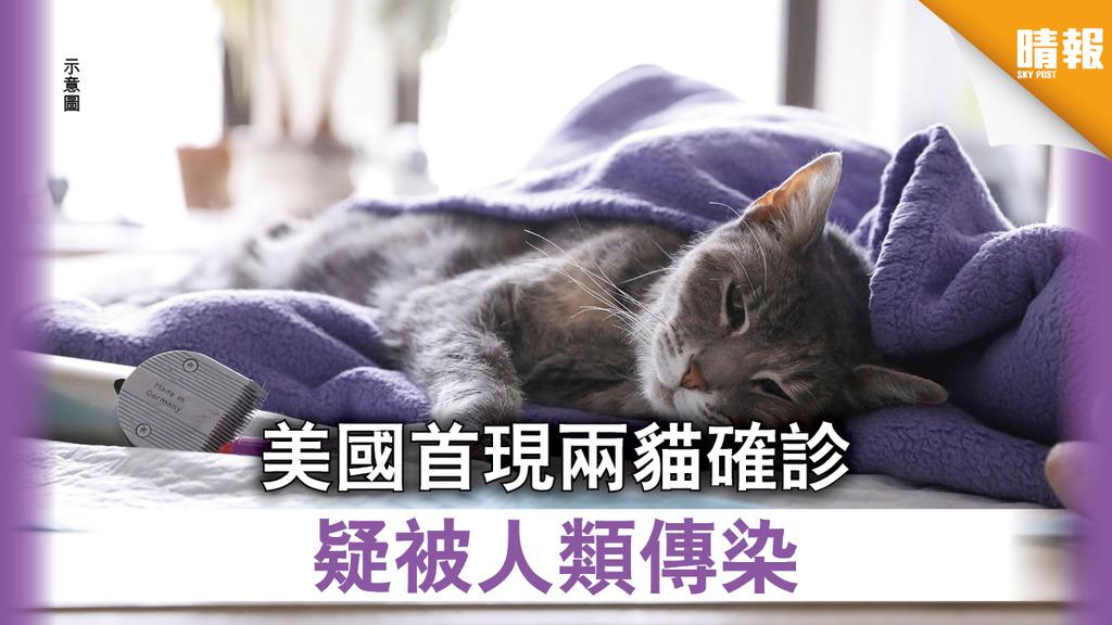 【新冠肺炎】美國首現兩貓確診 疑被人類傳染
