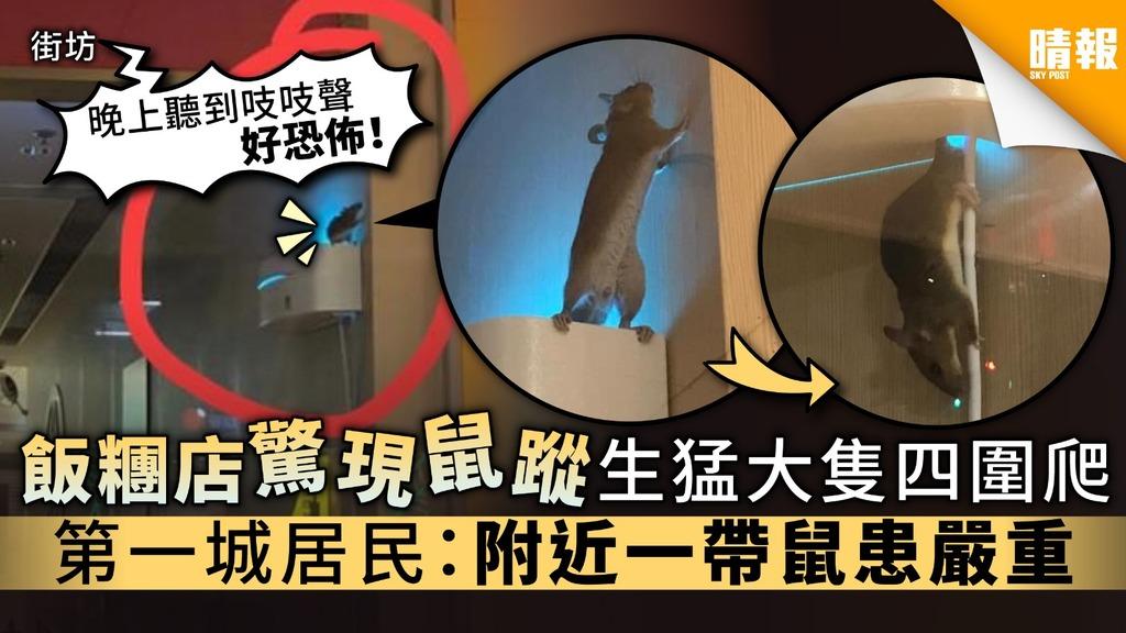 【食用安全】飯糰店驚現鼠蹤生猛大隻四圍爬 第一城居民:附近一帶鼠患嚴重