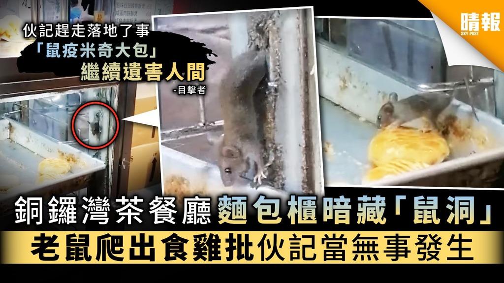 【食用安全】銅鑼灣茶餐廳麵包櫃有「鼠洞」 老鼠爬出食雞批伙記當無事發生
