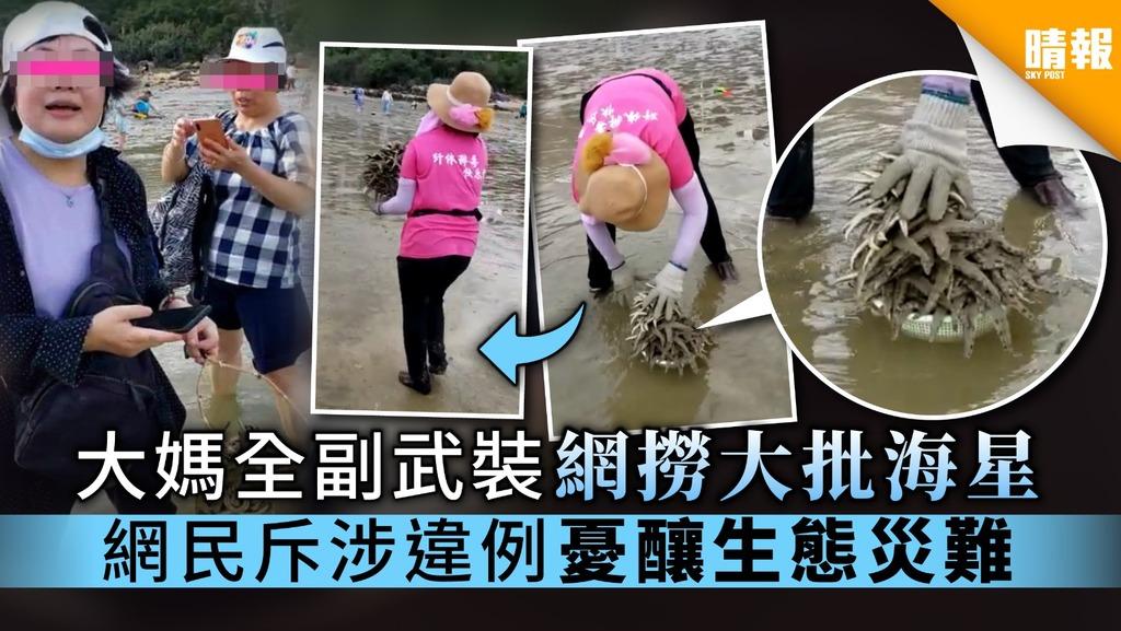 【海星末日】大媽全副武裝 網撈大批海星 網民斥涉違例 憂釀生態災難
