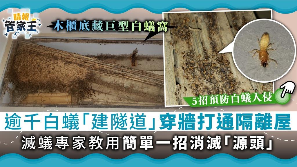 【白蟻入屋】逾千白蟻「建隧道」穿牆打通隔離屋 滅蟻專家教用簡單一招消滅「源頭」【附5招防白蟻入侵】