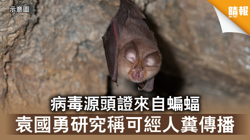 【新冠肺炎】病毒源頭證來自蝙蝠 袁國勇研究稱可經人糞傳播