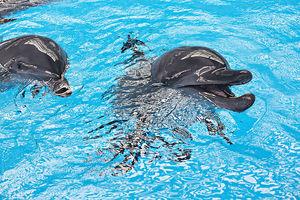 海洋公園財困 團體關注動物安置