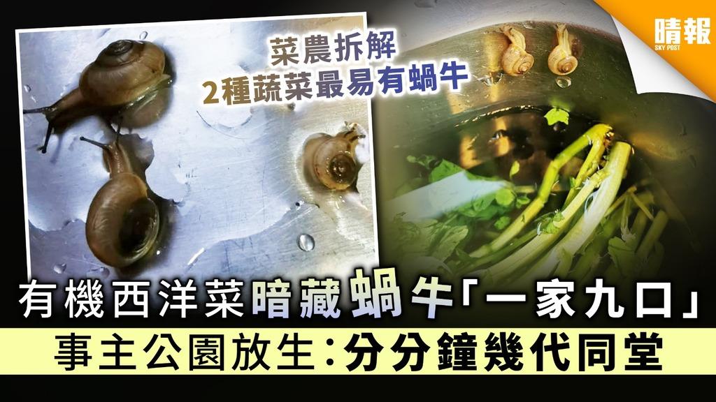 【買菜送蝸牛】有機西洋菜暗藏蝸牛「一家九口」 事主公園放生:分分鐘幾代同堂
