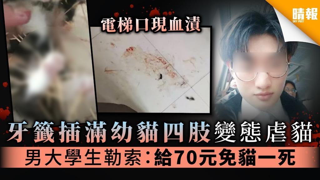 【救救動物】牙籤插滿幼貓四肢變態虐貓 男大學生勒索:給70元免貓一死