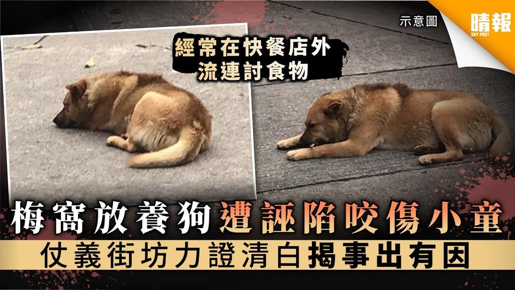 梅窩放養狗遭誣陷咬傷小童 仗義街坊力證清白揭事出有因