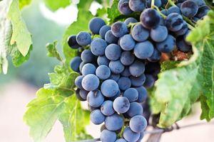 【紫色食物】8大養生紫色食物推介 高纖護膚護眼助減肥!