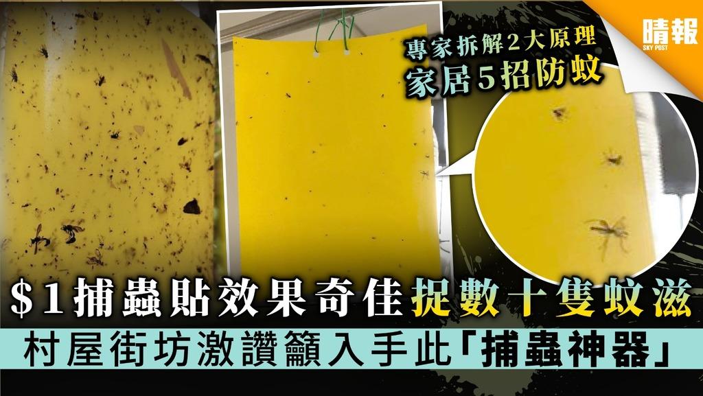 $1捕蟲貼效果奇佳捉數十隻蚊滋 村屋街坊激讚籲入手此「捕蟲神器」