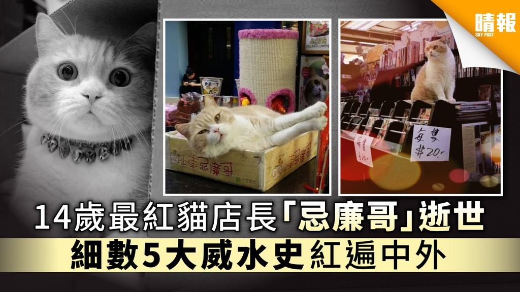 【忌廉哥離世】14歲最紅貓店長「忌廉哥」逝世 細數5大威水史紅遍中外