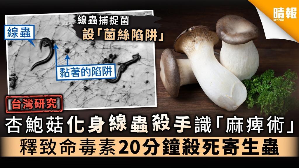 【台灣研究】杏鮑菇化身線蟲殺手識「麻痺術」 釋致命毒素20分鐘殺死寄生蟲