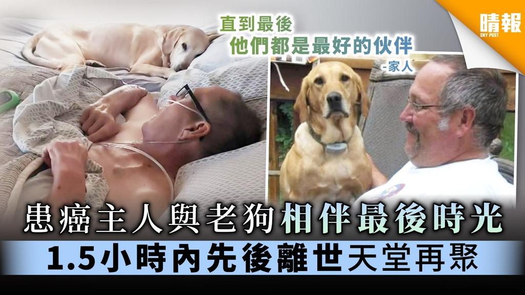【靈性忠犬】患癌主人與老狗相伴最後時光 1.5小時內先後離世天堂再聚
