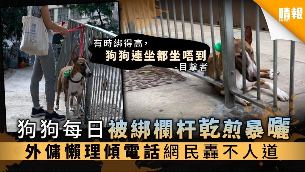 【狗主注意】狗狗每日被綁欄杆乾煎暴曬 外傭懶理傾電話網民轟不人道