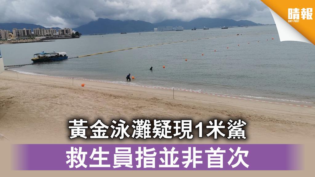 【香港鯊蹤】黃金泳灘疑現1米鯊 救生員指並非首次