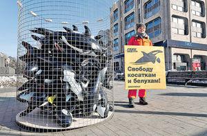 疫情致加工廠難運作 冰島叫停捕鯨