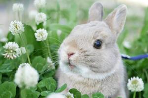 日本旅遊界KOL兔仔帶你遊京都景點 忘形賞花變食花超可愛~