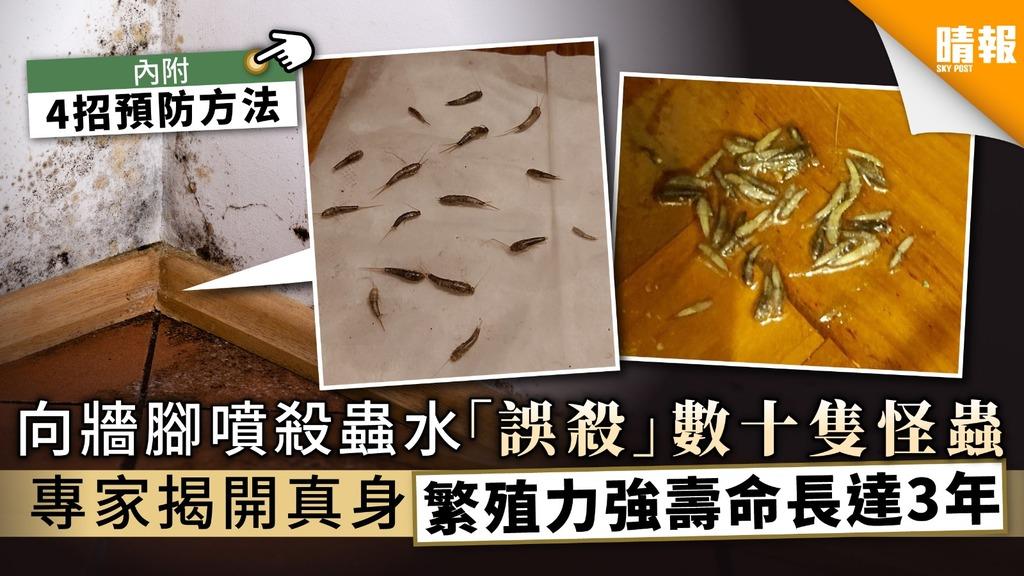 向牆腳噴殺蟲水「誤殺」數十隻怪蟲 專家揭開真身繁殖力強壽命長達3年【附4招預防方法】