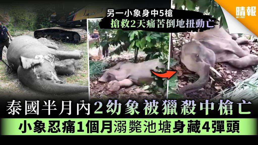 【冷血殘忍】泰國半月內2幼象被獵殺中槍亡 小象忍痛1個月溺斃池塘身藏4彈頭