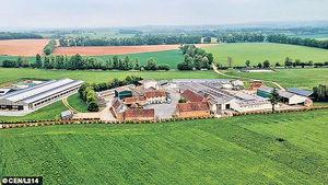 法農場研究增產乳量 乳牛胃部「開窿」太殘忍