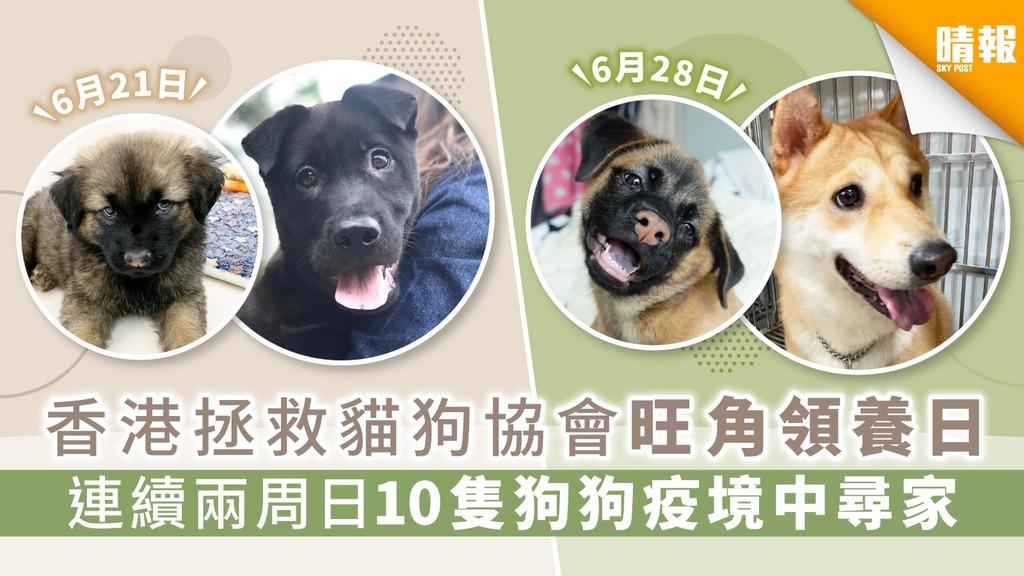 【周日好去處】香港拯救貓狗協會旺角領養日 連續兩周日10隻狗狗疫境中尋家