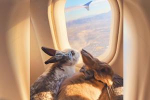 旅遊家兔仔跟住主人旅行打卡 孖住女朋友兔兔搭飛機甜蜜爆燈!