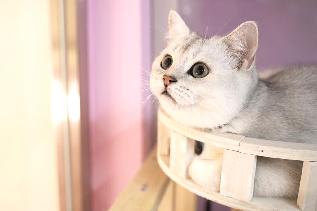 【西貢美食2021】西貢兩層高貓貓Cafe 9隻可愛小貓BB同你一齊玩!