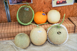 【揀蜜瓜貼士】果欄店主教你揀出甜蜜瓜3大貼士 日本當造蜜瓜品種+價錢