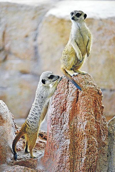 海洋公園新展館 狐獴象龜明登場 生日優惠延長至8.31